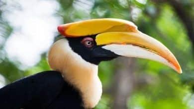 Bird Park Penang