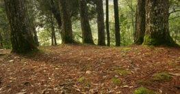 Wälder in Pahang
