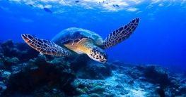 Turtle Islands